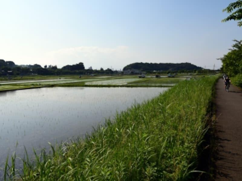 引地川沿いの緑道。周辺には田園風景が広がる