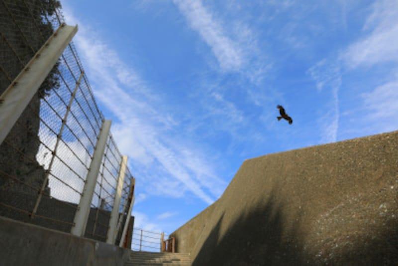 防波堤から見上げた空(撮影:MIWAKATOH)