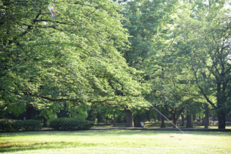 緑豊かな大庭城址公園