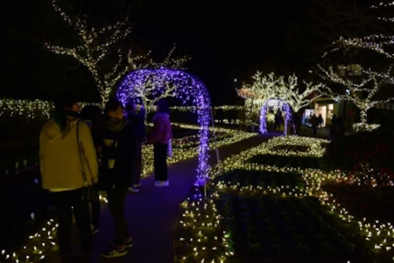 ライトアップされた「みどりの広場」(2017年12月15日撮影)