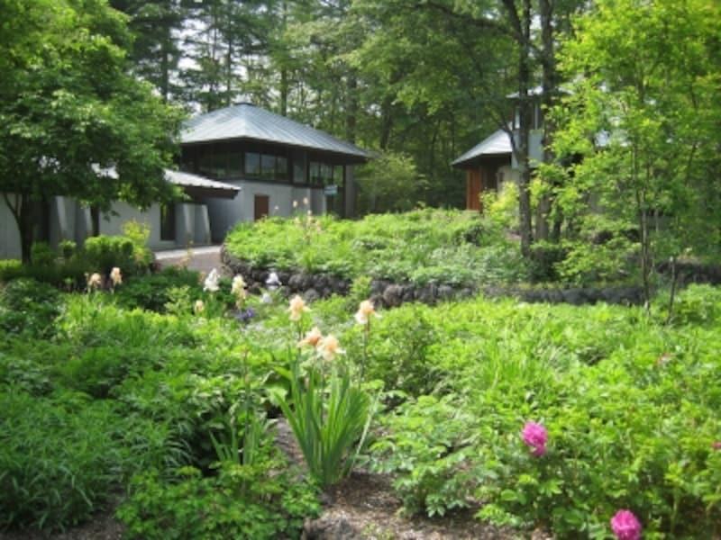 敷地内に開設された「ピクチャレスク・ガーデン」。庭園ミュージアムへの期待が高まります