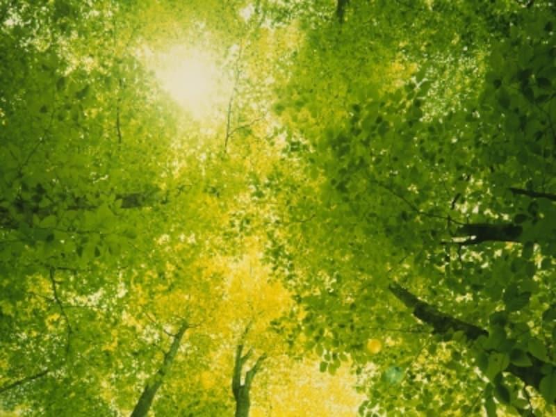 「グリーナリー」は、2017年の扉を力強く開き、私たちに希望をもたらしてくれる色