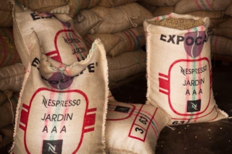収穫されたコーヒー豆