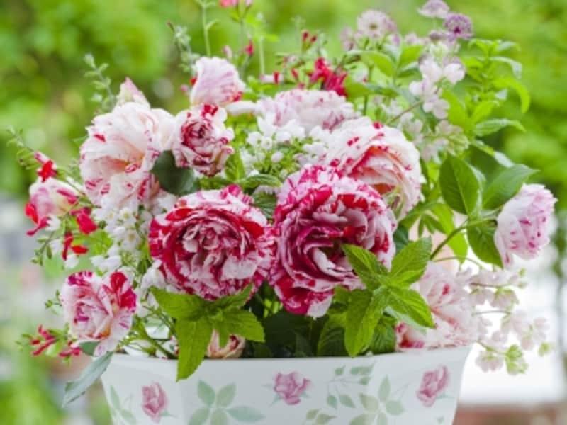 ローズピンクは、美容効果を高め、恋愛運を呼び込みます。