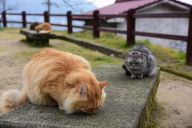 尾道の坂や路地を歩いていると、たくさんのネコに出会う