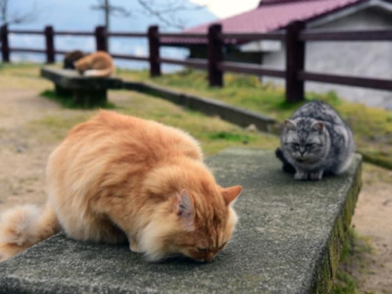 尾道のネコたちは、人によく懐いていて、とても愛くるしい姿を見せてくれる