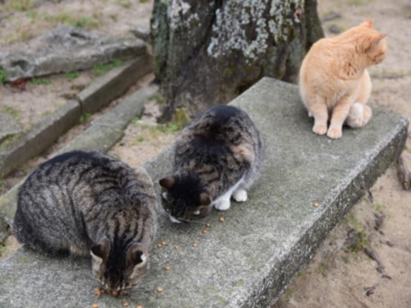 広場に集まるネコたち