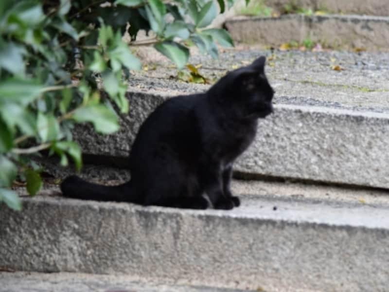 石段の途中にたたずむ黒ネコ