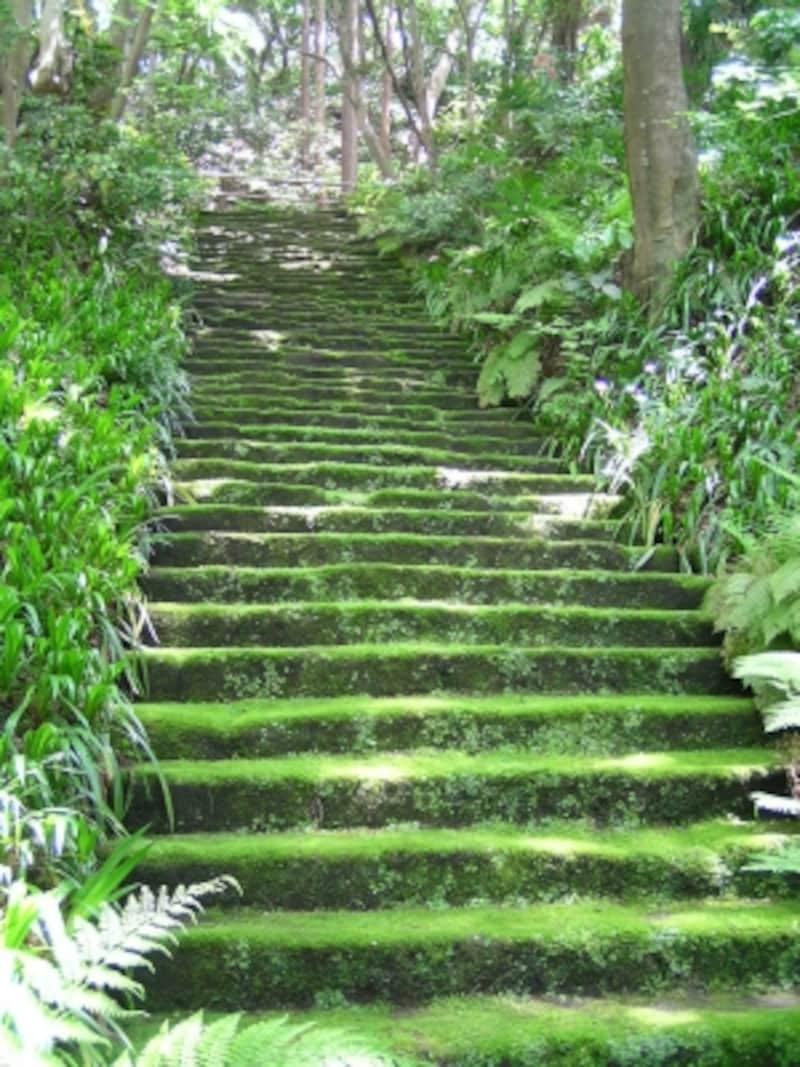 「こけ寺」妙法寺のこけ石段
