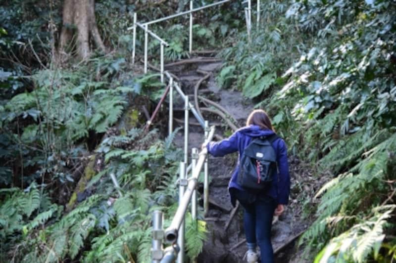 佐助稲荷神社の裏手から大仏ハイキングコースへ合流する道は、少し歩きづらいので注意!