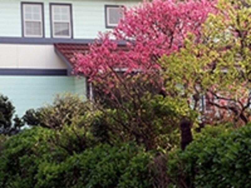 一戸建て住宅と樹木