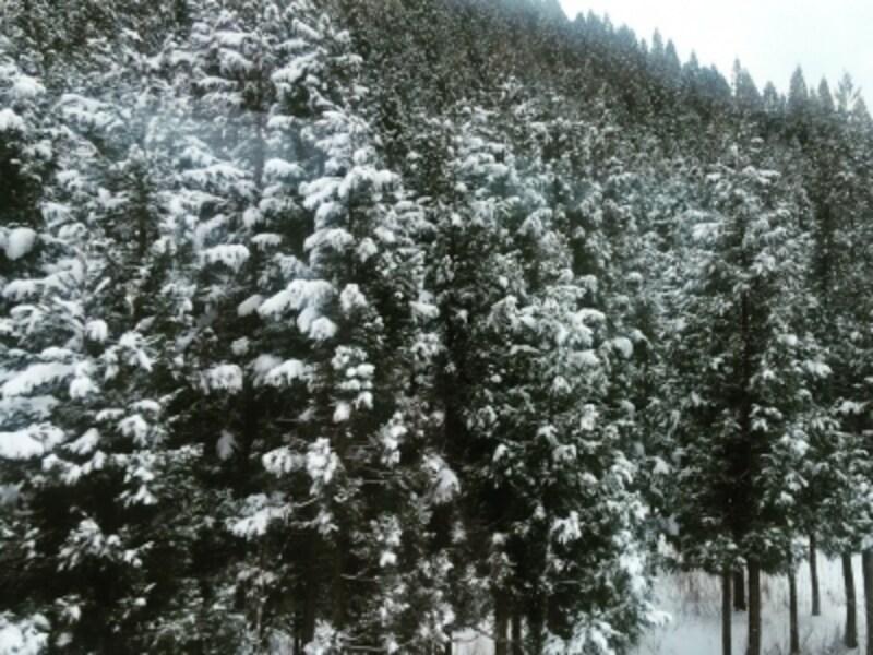粉砂糖を振りかけたような美しい雪景色