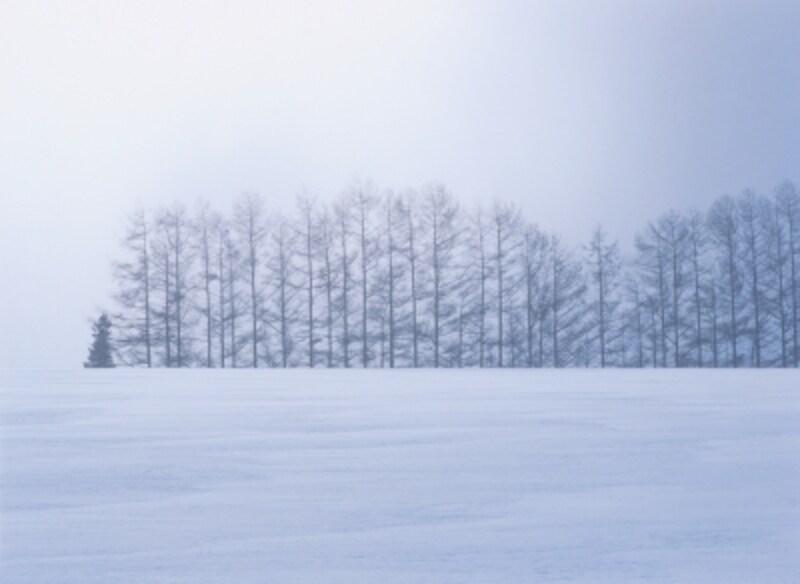 誰にも踏まれていないピュアな雪