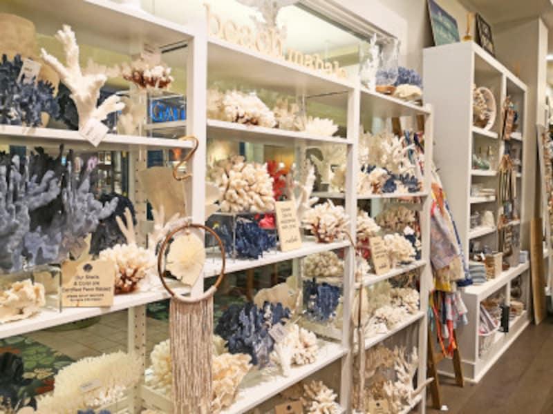 サンゴや貝殻のオブジェも
