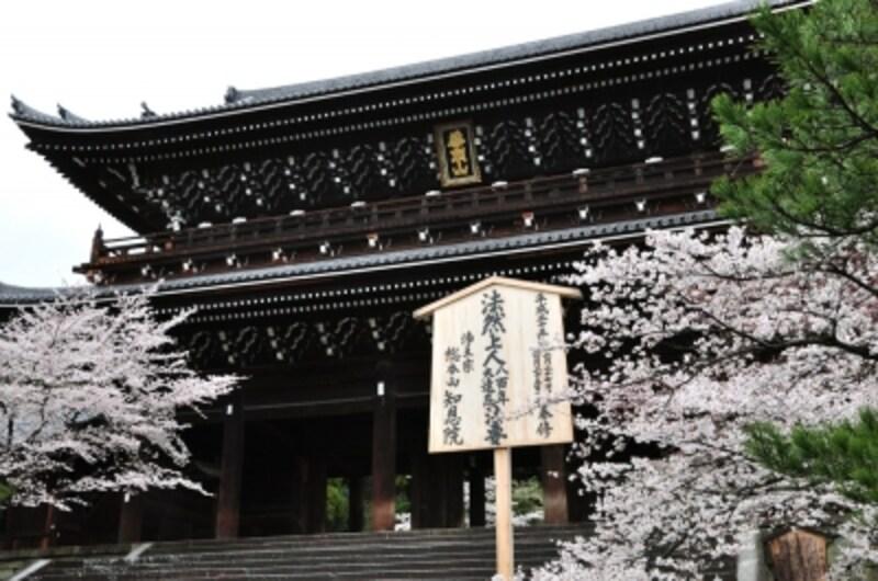 知恩院の巨大な山門と桜(2010年4月2日撮影)