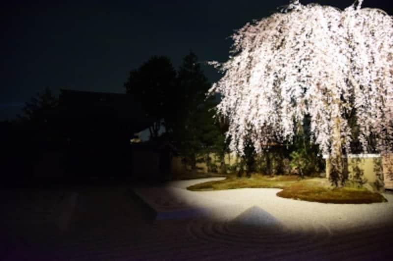 ライトアップされた高台寺の方丈前庭の枝垂れ桜(2016年3月31日撮影)