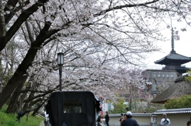 ねねの道から見た京都・東山のシンボル「八坂の塔」と桜(2010年4月2日撮影)