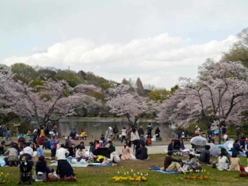 お花見(ソメイヨシノ)の時期はたいへんなにぎわい(2014年4月5日撮影)