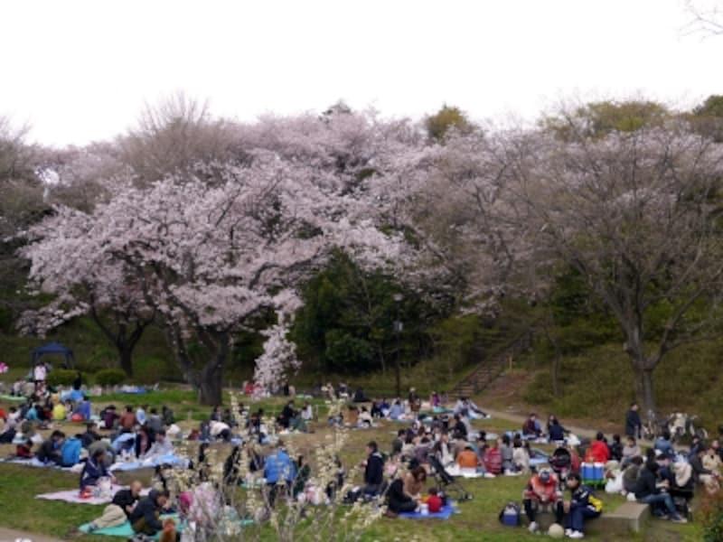 たいへん広い公園なのでシートを広げる場所はたくさん!(2014年4月5日撮影)