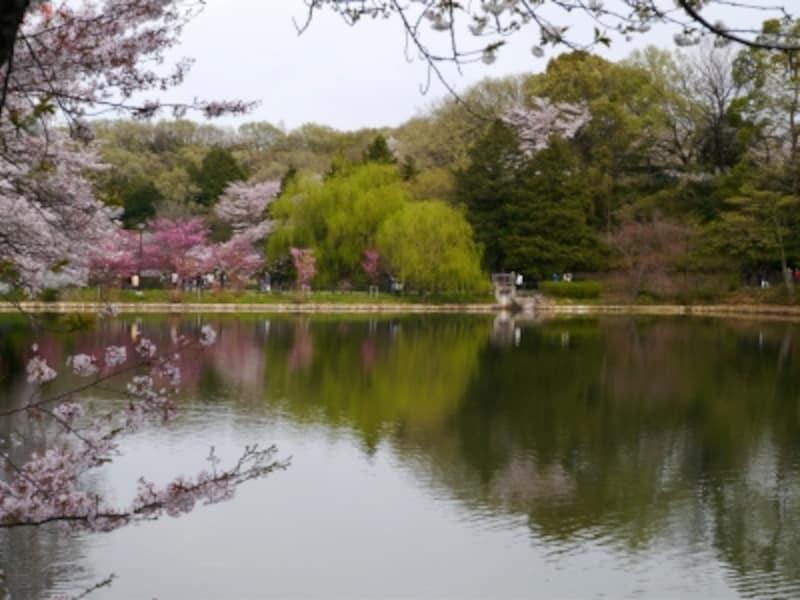 さまざまな色合いのサクラが咲き誇ります(2014年4月5日撮影)