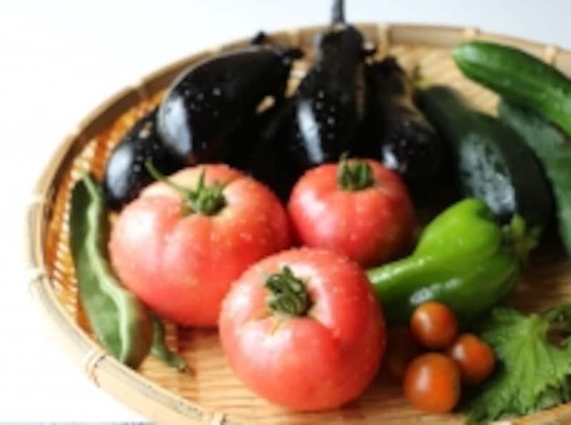 家庭菜園で手軽に作れる夏野菜
