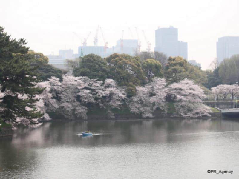 春の千鳥ヶ淵(千代田区)