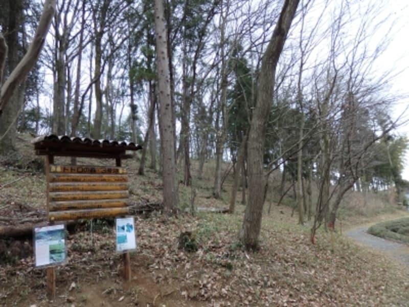 トトロの森3号地