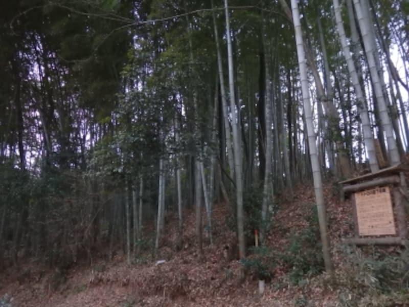 トトロの森7号地