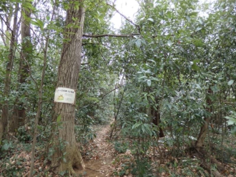 トトロの森33号地