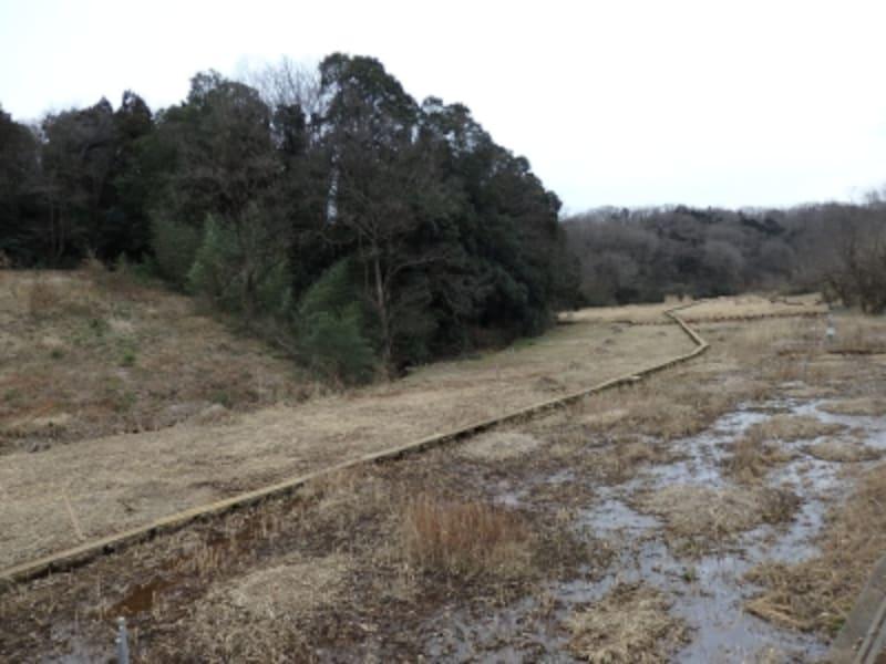 さいたま緑の森博物館周辺の湿地帯