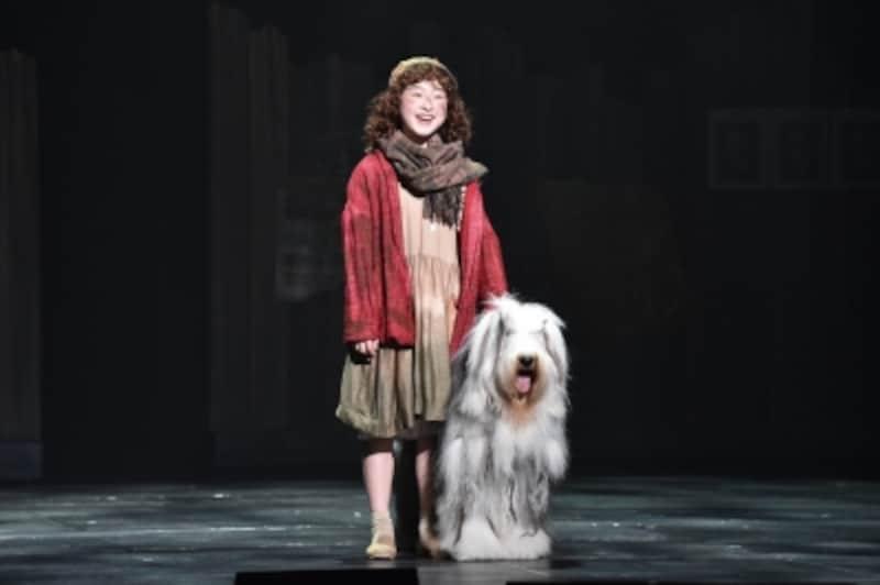"""2017年版『アニー』孤児院を飛び出したアニー(会百花)は出会った犬にサンディと名付け、""""明日はしあわせ""""と「トゥモロー」を歌う。写真提供:日本テレビ"""