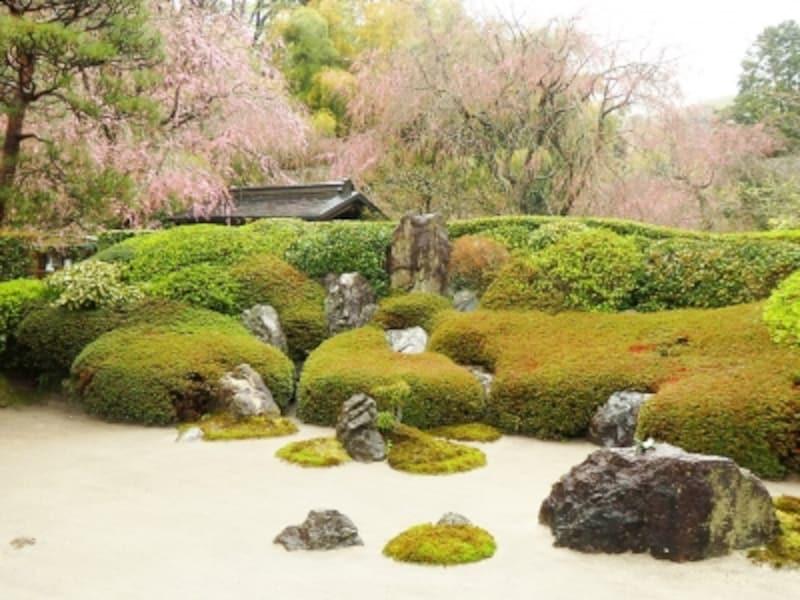 明月院の庭園undefined御朱印をいただく間に眺める情緒ある風景