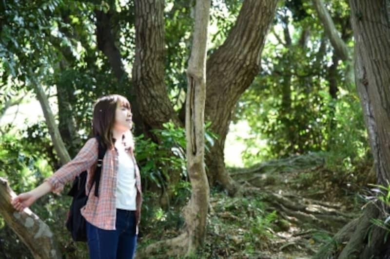 東京都心から電車でわずか1時間の古都・鎌倉で自然を満喫!
