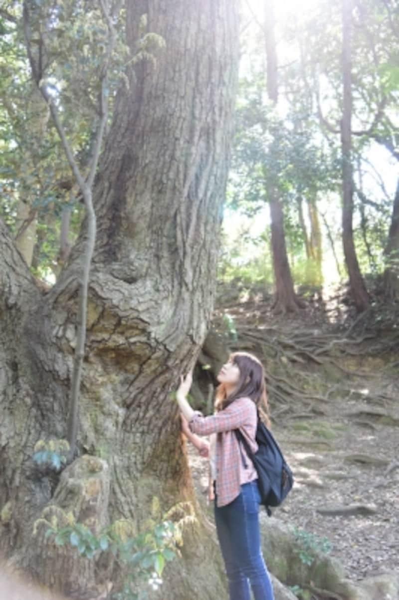 大きな木からパワーをもらいます。神々しい雰囲気ですね