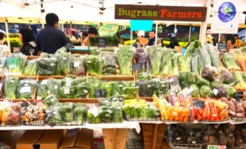 手に取れる高さから、立てて陳列され目の前に野菜が広がる光景は迫力があります