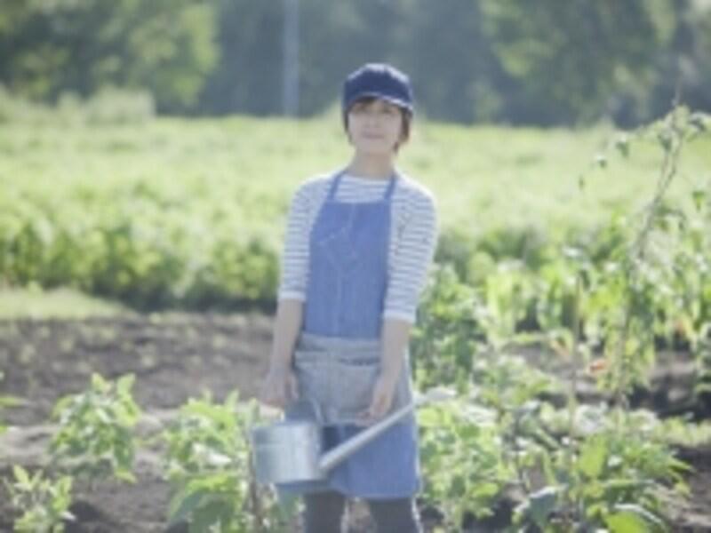 農作業している女性