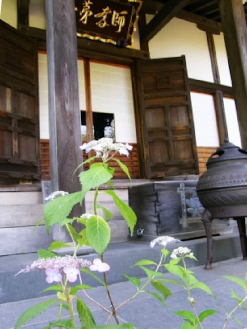 ヤマアジサイ咲く光則寺