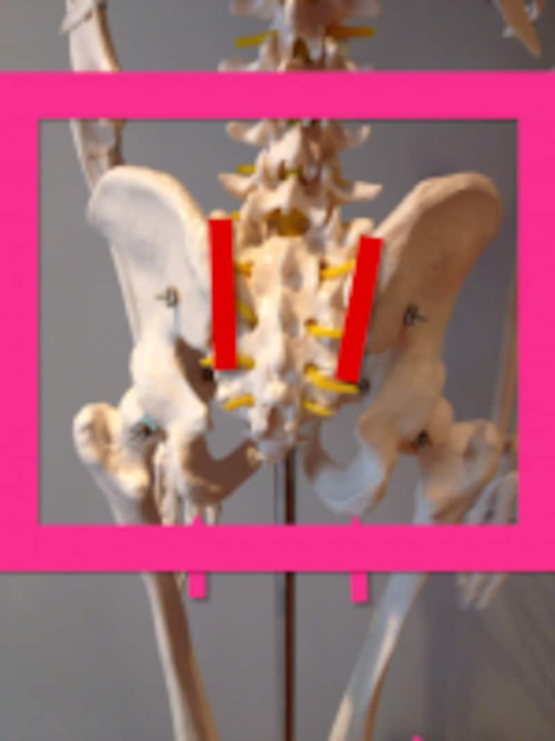 腰の後ろ側で、尾骨から外側に上がったあたりの関節(赤いラインのところ)