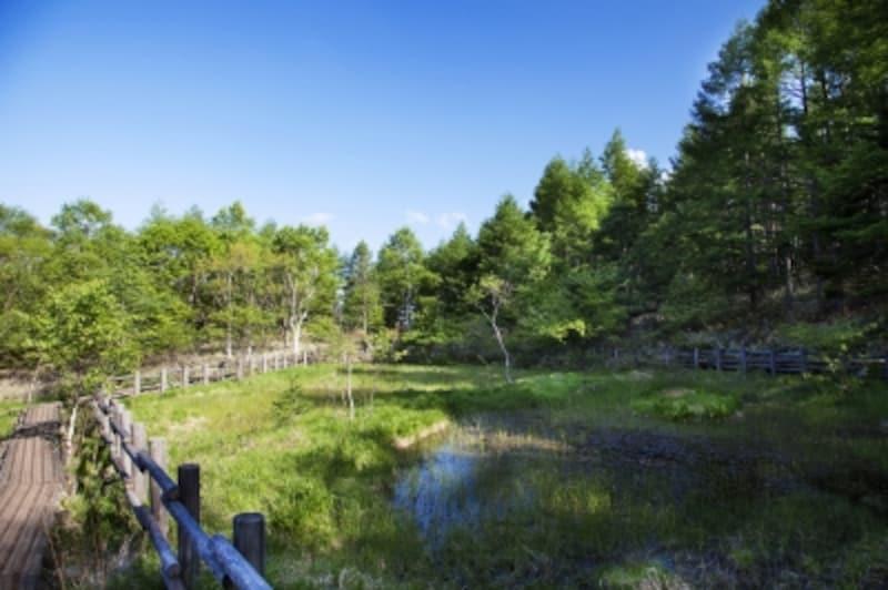 「八ヶ岳高原」で涼しい夏を過ごそう