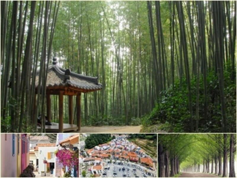 竹が風でさわさわ揺れる音も涼しげ。潭陽(タミャン)は綺麗な写真が撮れるスポットがたくさんあります。上段:竹緑苑、下段左・中央:メタプロバンス、下段右:メタセコイア並木道