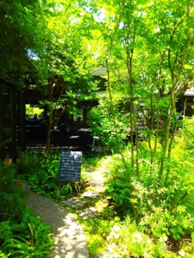 緑の小道にいざなわれて…カフェkaeruのお庭