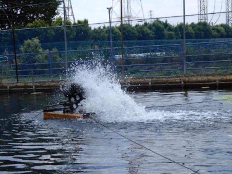 なまずの養殖池で空気を送り込む水車