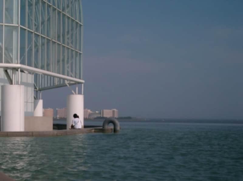 水族園からは舞浜のホテル群がよく見える