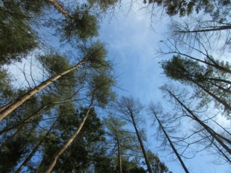 冬の森はシンプルだからこそ五感も研ぎ澄まされ