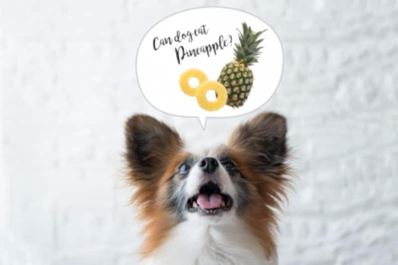 犬undefinedパイナップルundefined食べて良いundefined量undefined病気undefined薬undefined食べ合わせ