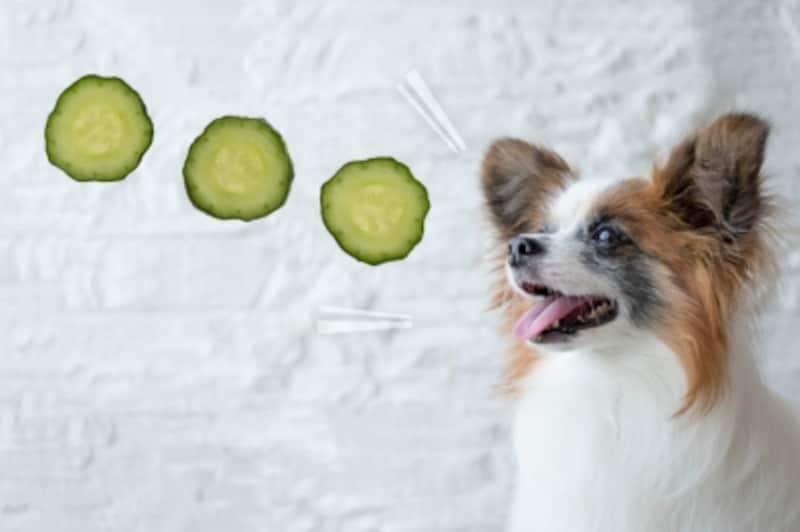 犬undefinedきゅうりundefined食べて良いundefined量undefined病気undefined薬undefined食べ合わせ