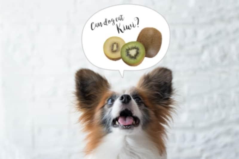 犬にキウイを与えると健康に期待できることと注意点
