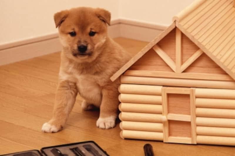 犬の習性から見るハウスの必要性