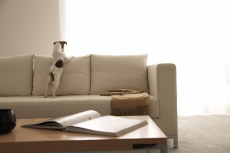 犬は家族の一員だからこそゲージは皆の傍においてね