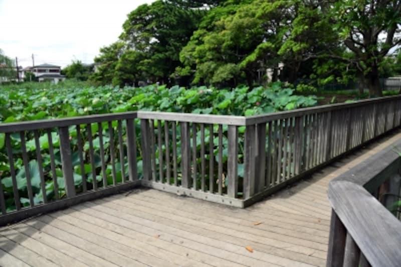 桜小路公園(第二はす池)